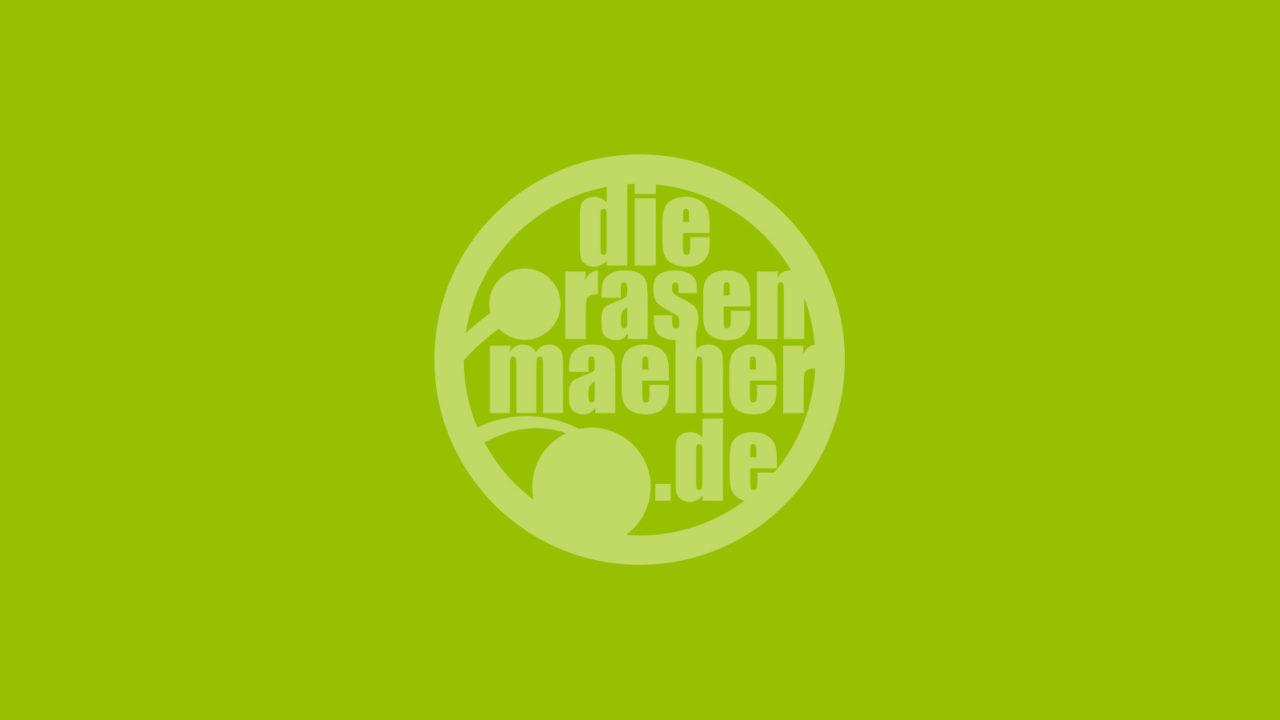 Die Rasenmäher MTB Camps, Events und Adverntures, Mountainbike Touren & Fahrtechnik - Bildplatzhalter